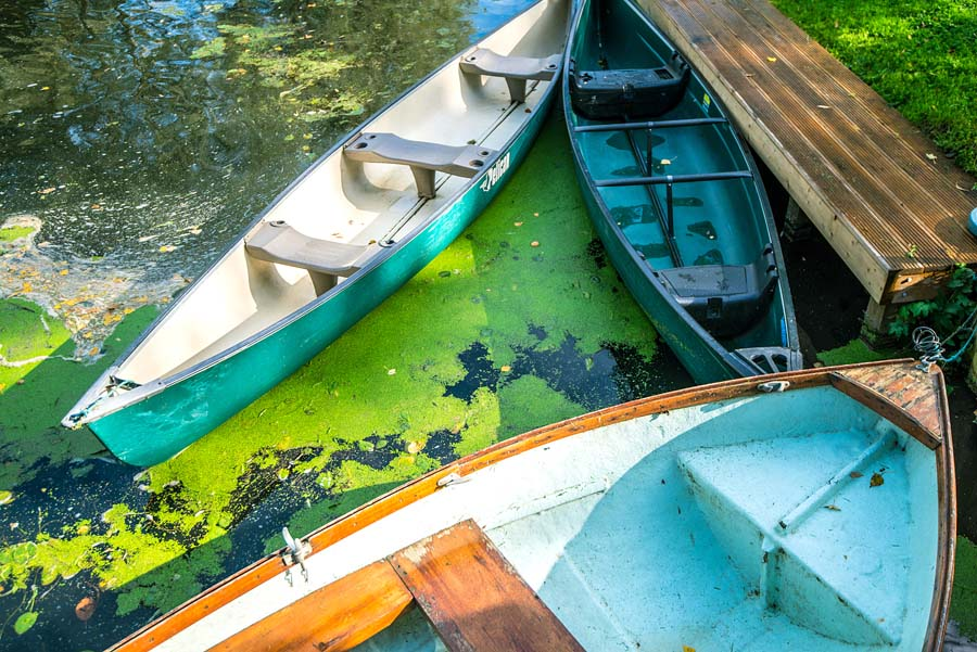boats in a lake with green water